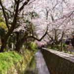 哲学の道・桜の見頃と見どころ! 花見におすすめの桜のトンネル!