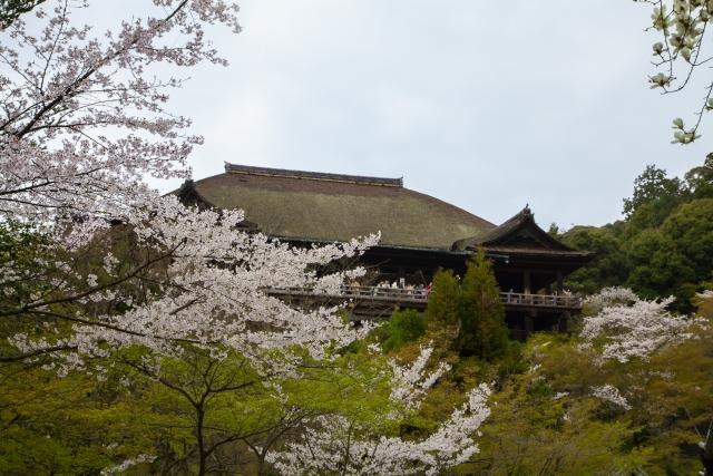清水寺 桜 ライトアップ 時間