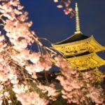 東寺・桜のライトアップ2018【日程・時間・見頃】五重塔が映える!