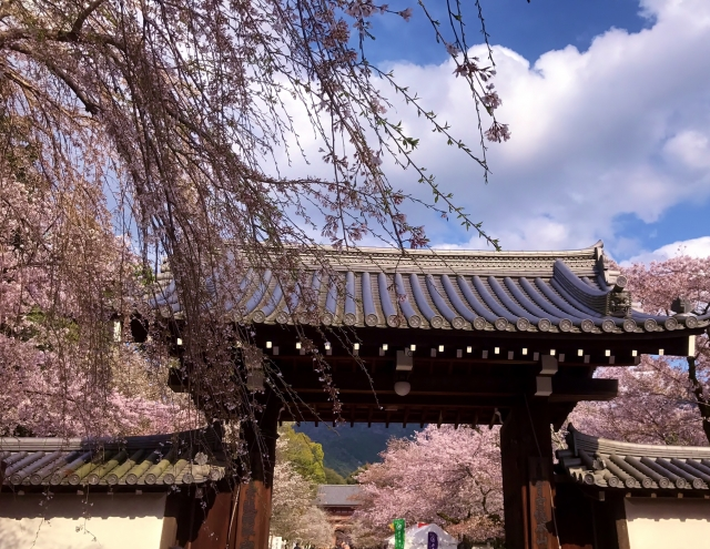 京都 歴史 醍醐寺 豊臣秀吉