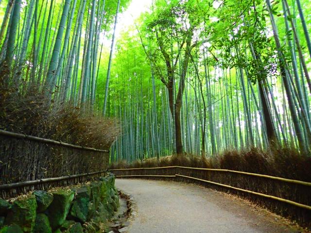 京都のひとり旅 竹林の小径
