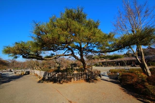 京都のひとり旅 嵐山