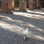 京都の初詣!ワンちゃんも喜ぶ犬連れで参拝ができる南禅寺!